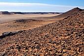 Hard and rocky plateau of a Hamada-style desert, Sahara, Libya