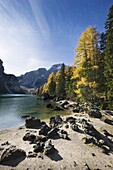 The Pragser Wildsee Lake Prags, Lago die Braies is one of the main toruist attractions in South Tyrol  In late fall the yellow larch trees are reflecting in the dark water of the lake     Prags, Nature Park Fanes Sennes Prags, South Tyrol, Alto Adige, Ita