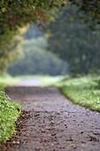 empty parkland footpath in lagan valley regional park autumn morning in mist county down northern ireland uk