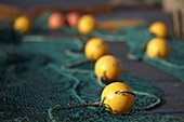 fishing net with yellow floats lying out on the quay to dry in the sun county down Northern Ireland UK