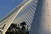 Spain. Valencia. City of the Arts and the Sciences. L´Umbracle, a landscaped walk with plant species indigenous to Valencia  such as rockrose, lentisca, romero, lavender, honeysuckle, bougainvillea, palm tree). It harbors in its interior The Walk of the S