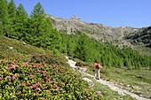 Woman ascending to mountain hut Schoene Aussicht, Schnals valley, Oetztal Alps, Vinschgau, Trentino-Alto Adige/Südtirol, Italy