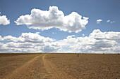 Sand track through steppe under clouded sky, Kenia, Afrika