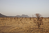 Barren veld in Dogon land, Mali, Africa