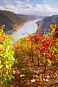 Blick über Weinberg auf Oberwesel am Rhein, Rheinland-Pfalz, Deutschland