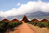 Vineyard and Ysios winery building designed by architect Santiago Calatrava, Sierra de Cantabria mountains in background, Laguardia, Rioja Alavesa, Araba, Basque Country, Spain