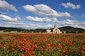 Poppy field with poppies, Santa Maria del Manzano church in the background, Castrojeriz, Camino Frances, Way of St. James, Camino de Santiago, pilgrims way, UNESCO World Heritage, European Cultural Route, province of Burgos, Old Castile, Castile-Leon, Cas