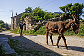Man and donkey in Foncebadon, Camino Frances, Way of St. James, Camino de Santiago, pilgrims way, UNESCO World Heritage, European Cultural Route, province of Leon, Old Castile, Castile-Leon, Castilla y Leon, Northern Spain, Spain, Europe