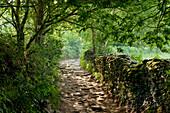 near Mercadoiro, near Portomarin, Camino Frances, Way of St. James, Camino de Santiago, pilgrims way, UNESCO World Heritage, European Cultural Route, province of Lugo, Galicia, Northern Spain, Spain, Europe
