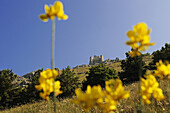 Castle behind yellow flowers in the sunlight, Rocca Calascio, Abruzzi, Italy, Europe