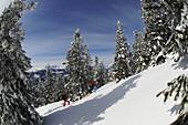 People ski touring through snowy landscape, Dürrnbachhorn, Reit im Winkl, Chiemgau, Upper Bavaria, Germany, Europe