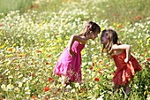 Caucasian ethnicity, child, childhood, Female, field, flower, girl, kid, spring, young, youth, F57-1148263, AGEFOTOSTOCK