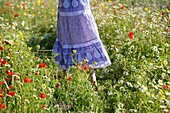 Caucasian ethnicity, child, childhood, Female, field, flower, girl, kid, spring, young, youth, F57-1149191, AGEFOTOSTOCK