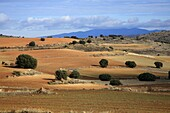 Agricultural landscape Wildlife Refuge near the Gallocanta Aragón Zaragoza