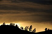 Tree silhouettes on the Blacktail Plateau with passing thunderstorm
