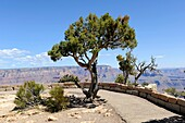Moran Point South Rim Grand Canyon National Park Arizona