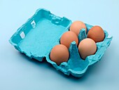 Eggs in a egg carton isolated against a blue background
