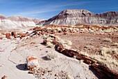 Arid, Arizona, Badlands, Desert, Dry, Petrified forest national park, Rock, Southwest, United states of america, Weather, Winter, Wood, S19-1107246, agefotostock