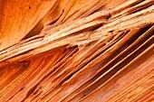 Arizona, Cottonwood cove, Delicate, Desert, Fin, Landscape, Nature, Page, Rock, Sandstone, Scenic, South coyote buttes, Southwest, United states of america, S19-1107387, agefotostock