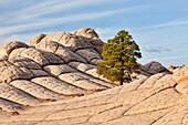 Arizona, Delicate, Desert, Landscape, Nature, Page, Rock, Sandstone, Scenic, Southwest, Swirls, United states of america, White pockets, S19-1107406, agefotostock