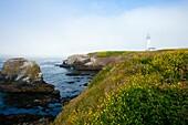 beacon, coast, fog, Landscape, lighthouse, ocean, Oregon, point, scenic, USA, wildflower, Yaquina, S19-1190533, AGEFOTOSTOCK