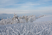 Winter stroll on Wasserkuppe Mountain, near Gersfeld, low mountain range, Rhoen, Hesse, Germany
