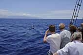 Whale and dolphin watching from Los Gigantes with  M/S Katrin, Santiago del Teide,  Tenerife, Spain