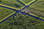Aerial view of drainage canals and Fresian cattle in meadows near the river Weser, Lower Saxony