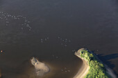 Aerial of birds above the River Elbe, small peninsula, Lower Saxony, Germany