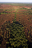 Aerial photo of the Lüneburg heath, nature reserve, Lower Saxony, Germany