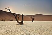 Abgestorbene Bäume auf Tonboden vor roter Sanddüne, Deadvlei, Sossusvlei, Namib Naukluft National Park, Namibwüste, Namib, Namibia