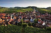 Blick über Weinberg auf Oberrotweil, Vogtsburg im Kaiserstuhl, Baden-Württemberg, Deutschland