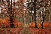 Woodland path, biosphere reserve Schorfheide-Chorin, Brandenburg, Germany