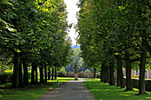 Chestnut alley at the palace gardens, Weikersheim, Tauber valley, Romantic Road, Baden-Wurttemberg, Germany