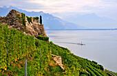 Vineyard at Lake Geneva, Saint-Saphorin, Lavaux, Canton of Vaud, Switzerland