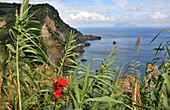 Vegetation and north coast, Island of Flores, Azores, Portugal, Europe
