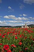 View over poppy field to church Colegiata Santa Maria del Manzano, Castrojeriz, Castile and Leon, Spain