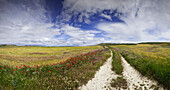 Path between fields, Burgos, Castile and Leon, Spain