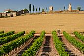 Pilgrim passing a vineyard, Cirauqui, Navarra, Spain