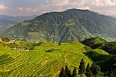 The beautiful rice terraces at LongJi in Guangxi, China.