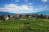 Weinberg, Lumbarda, Korcula, Dubrovnik-Neretva, Dalmatien, Kroatien