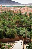 Date Palm oasis, Figuig, province of Figuig, Oriental Region, Morocco