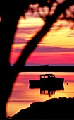 Lobster boat at sunrise, Robert's Cove, Orleans, Cape Cod