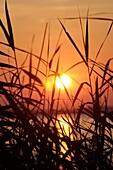 Marsh Grasses at sunset, Chesapeake Bay
