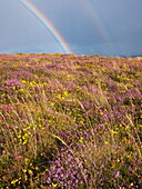 August, Britain, British, Calluna Vulgaris, Cloud, Clouds, Cloudy, Country, Countryside, England, English, Europe, European, Exmoor, Flower, GB, Gorse, Great Britain, Heather, Hills, Landscape, Landscapes, Many, Moor, Multiple, National Park, Rainbow, Rur