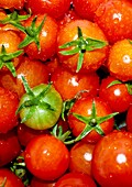 Ripe, red cherry tomatoes in bunch Close up Horizontal