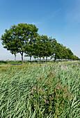 Green Coastal Highway, Störtebeker Street, near Emden, East Frisia, Lower Saxony, Germany
