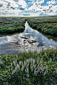 Salt Marsh, Reflection of clouds in water, Loog Settlement, North Sea Island Juist, East Frisia, Lower Saxony, Germany