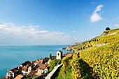 Vineyard with St. Saphorin and lake Geneva, lake Geneva, Lavaux Vineyard Terraces, UNESCO World Heritage Site Lavaux Vineyard Terraces, Vaud, Switzerland, Europe