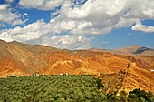 Plantation of date palm trees at the foot of the barren Hajar mountains, Wilayat of al Hamra, Sultanate of Oman